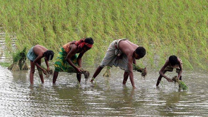 Bangladesh farmers struggle with rising sea level. …