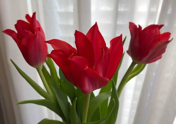 Little-known fact:  Tulips are not native to the Netherlands!  Ottoman Turks cul…