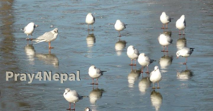 Over 150 species of Tibetan birds migrate to Nepal to take refuge from the bitte…